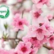 Organic Cosmetics - Benefits for Environment