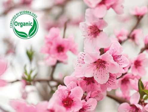 Organic Cosmetics - Benefits for Environment